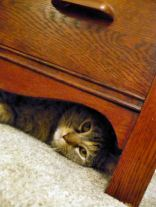 Cat under the dresser