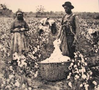 cotton picking exploitation