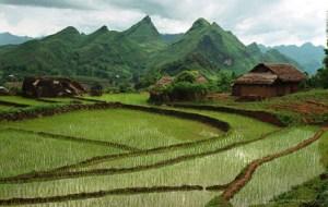 terraced-rice-paddies
