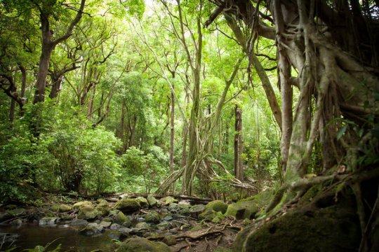 Pristine landscapes