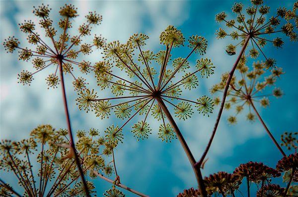 Geometry of a flower