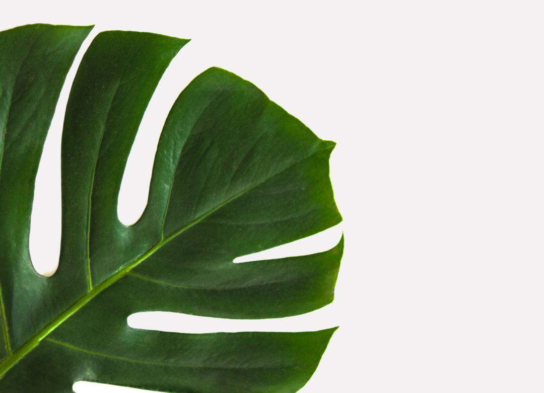 beautiful-botanical-bright-912413