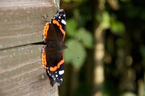 Butterflies 8