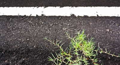 Picture of road with white line and weed