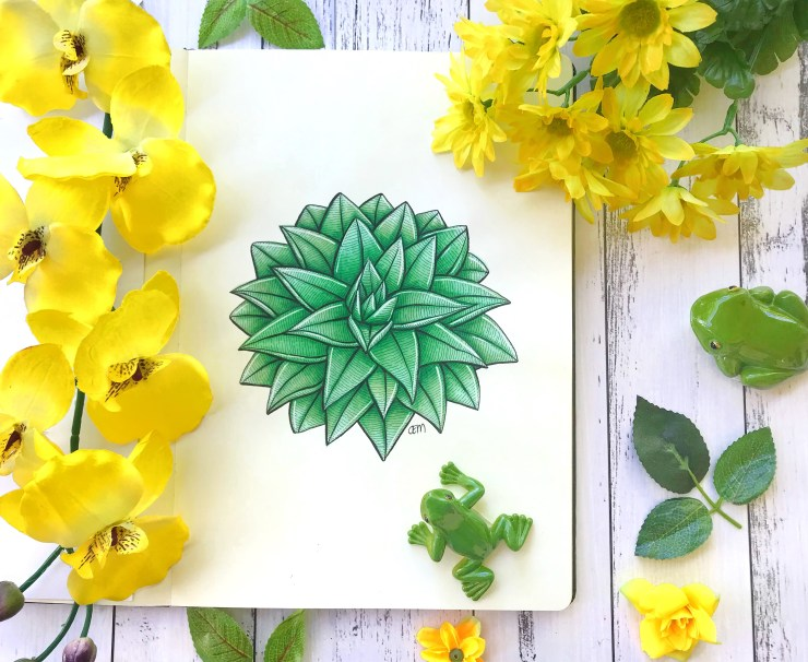 Succulent drawing by Chrissie Murphy Designs