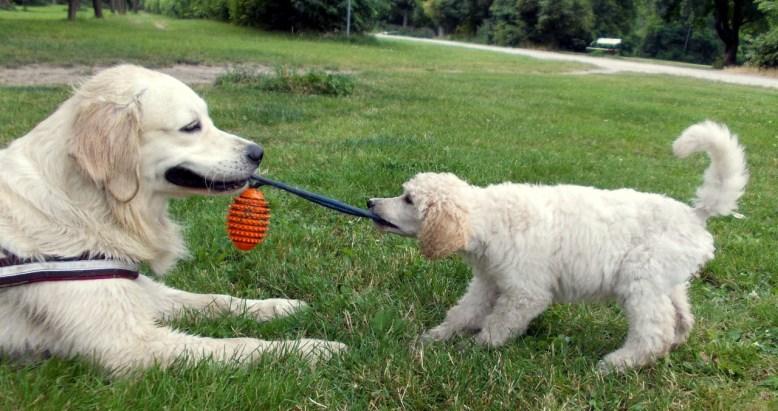 Nayeli Phoebe Puppy