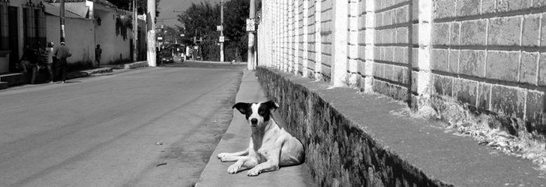 San Pedro El Alto Dog