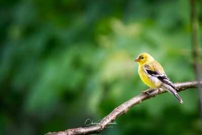 Bird Photography BTS: Photos from the Throne