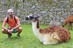 Chris Tarzan Clemens - Machu Picchu Llama