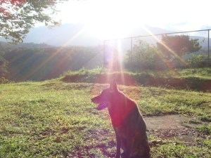 Christa Wojo's Roscoe with volcan Baru and sun shining behind him.