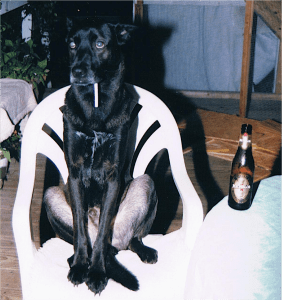 Christa Wojo's dog Roscoe with cigarette in his mouth and a bottle of beer.