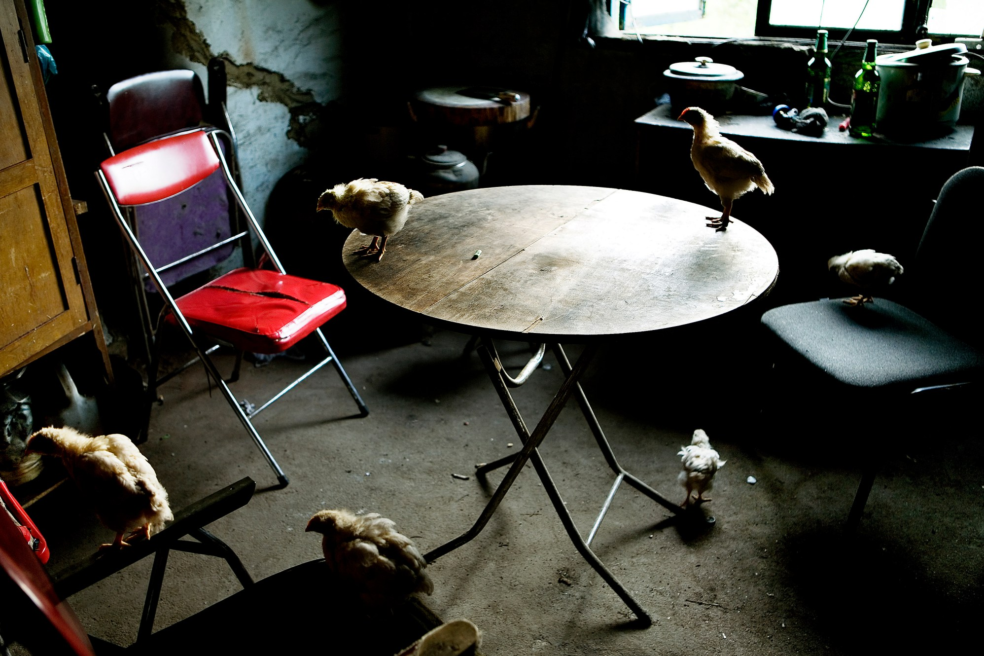 In the ruined house of the migrant family chickens roam freely in the kitchen. The family came to Jilin more than ten years ago to find work and they still hope for a brighter future in the big city. Christian Als / GraziaNeri