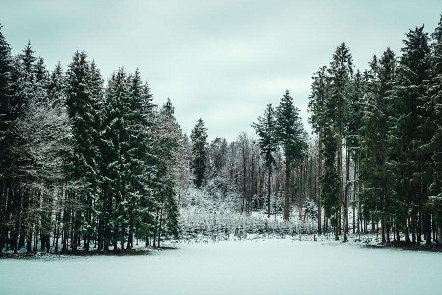 Winter / Wald / Natur