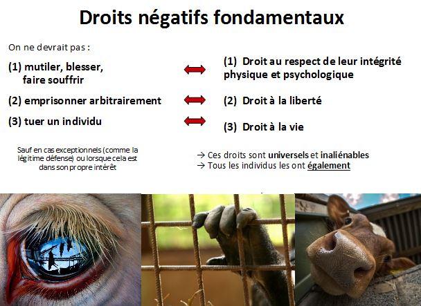 droits negatifs fondamentaux des animaux personnes
