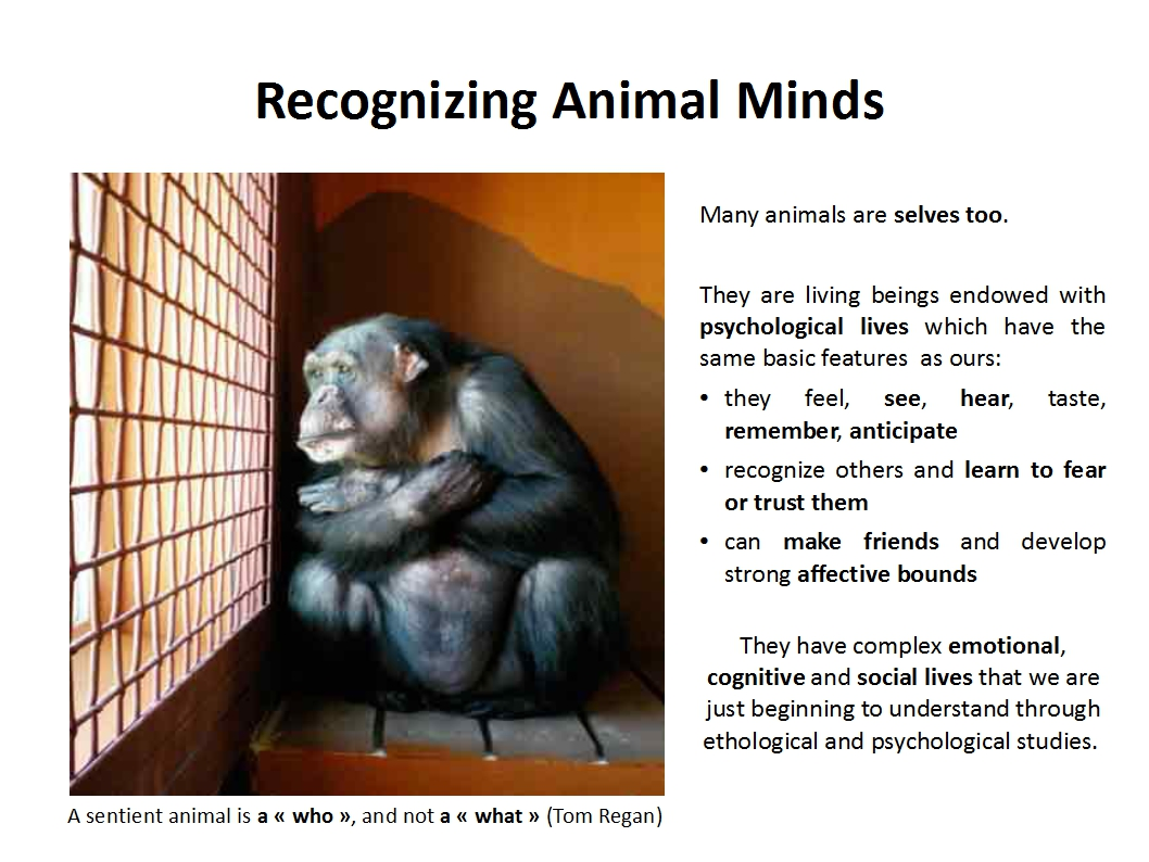 Presentation Animal Experimentation Bailey 2015_animal minds