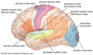 human-brain-470x282