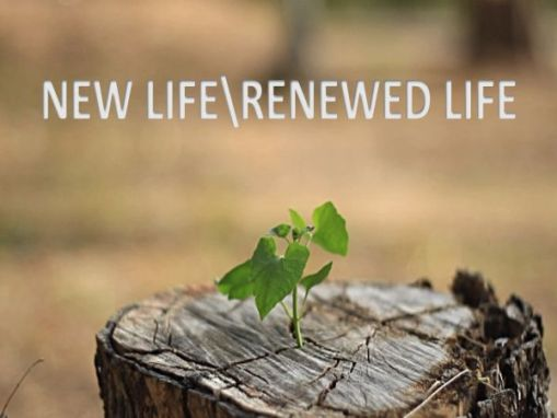 New Life/Renewed Life