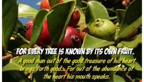Luke 6 v 43 Every Tree