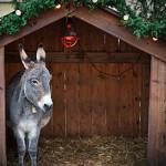 Christian nativity animal costumes