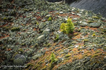 Autumn Rocks, Val d'Anniviers