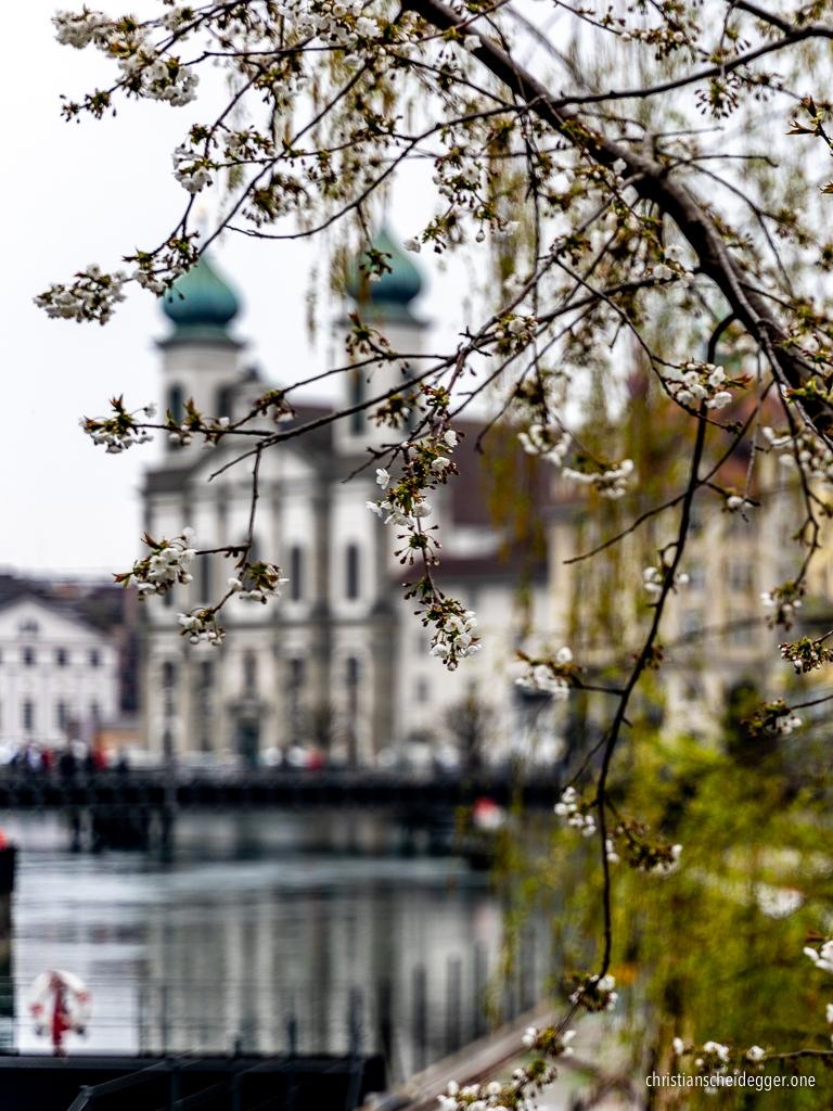 Frühling 2019 in Luzern