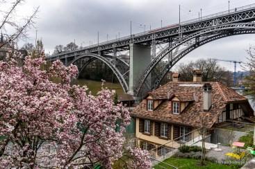 Frühling unter der Kirchenfeldbrücke