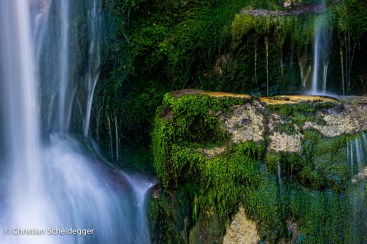 grünes Moos im Wasserfall