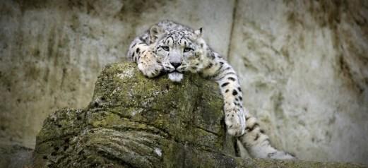 Snooze @ Zurich Zoo