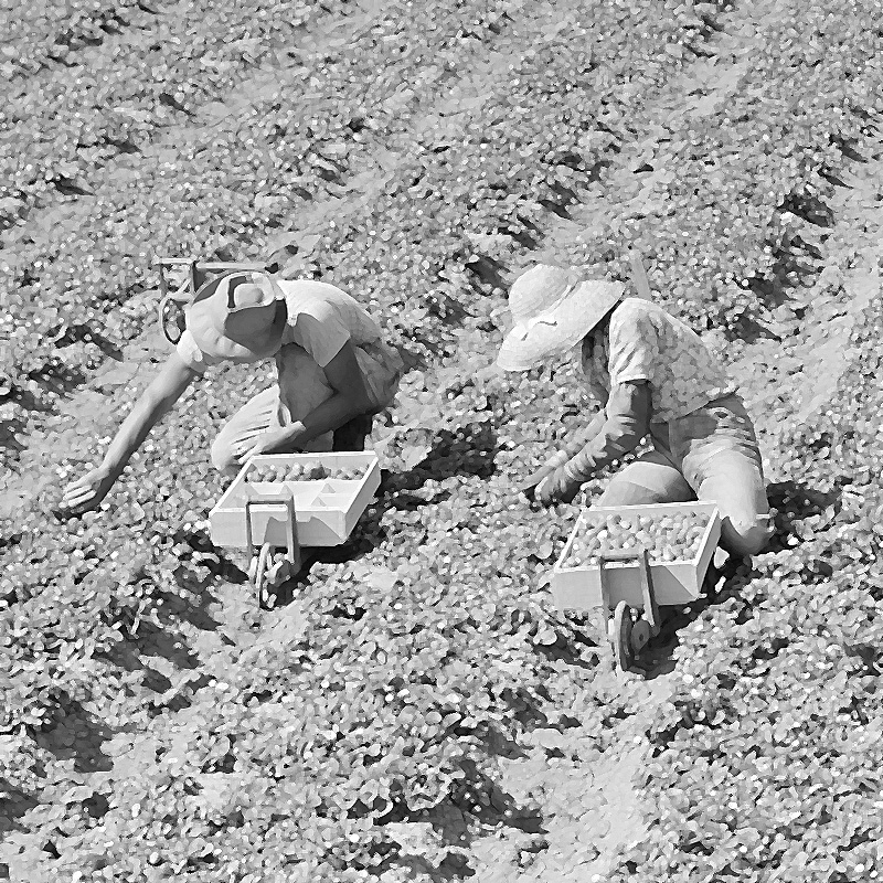 The Meaning of Our Labor