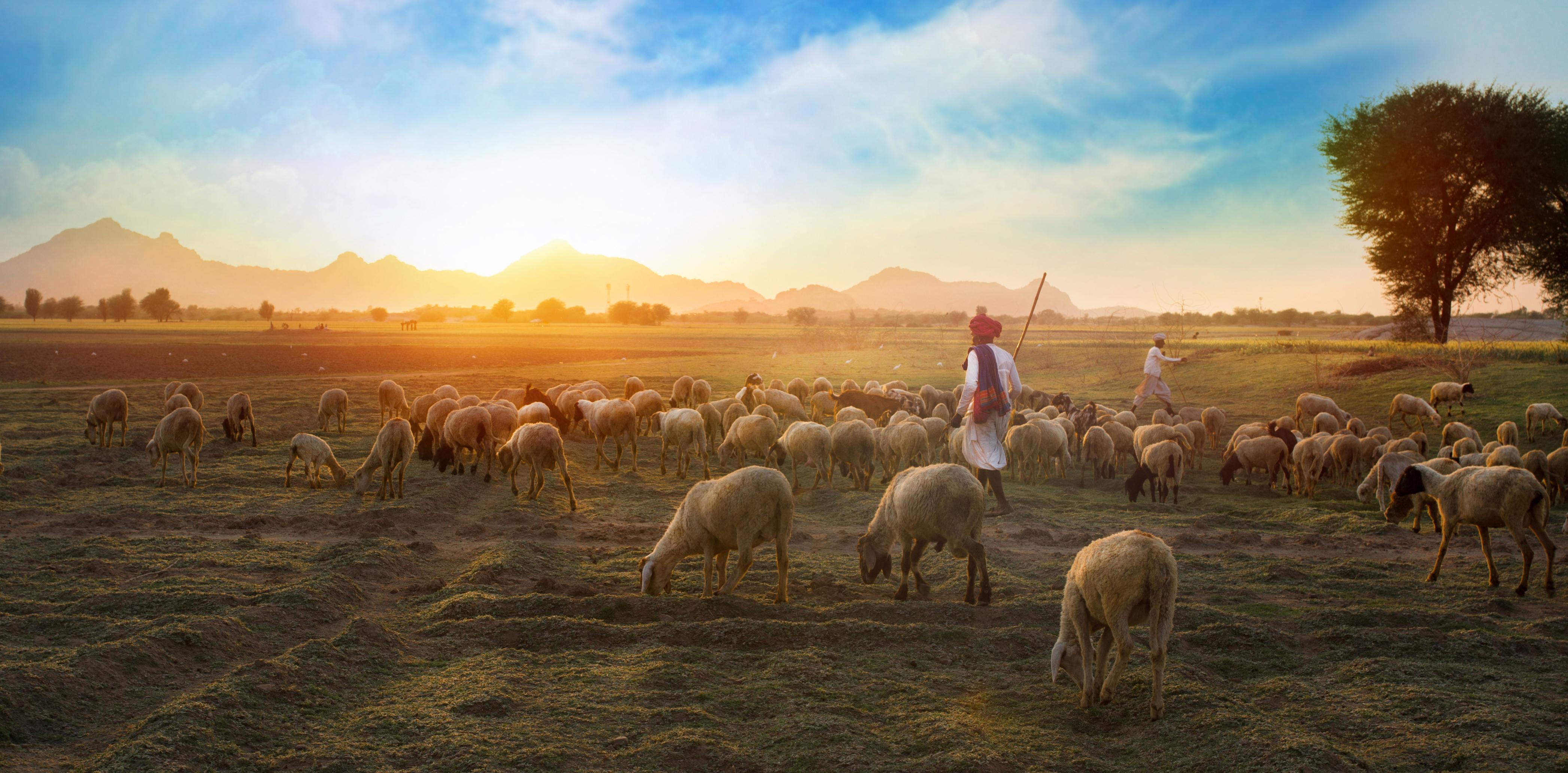 Woe to the Shepherds – Jeremiah 23:1 (Part 2)