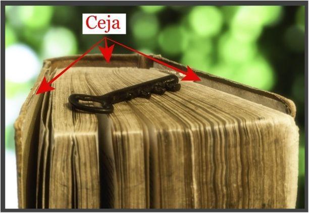 anatomia-del-libro-ceja-tips-christina-birs