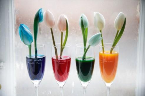 vinterferie-med-born_projekter_farvede-blomster_christinadamgaard-com