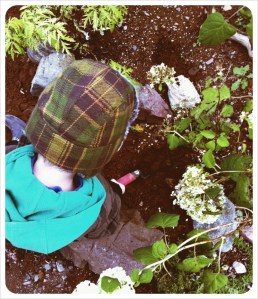 Planting bulbs in the garden in Northern Arm, NL - Fall 2011