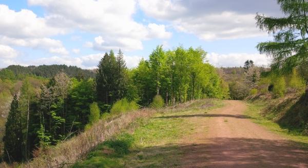 mireystock_spring_trees_20150426_143925.smaller