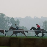 Racing horses on Warren Hill in Newmarket, England