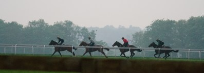 Horses in training on Warren Hill, Newmarket, England.