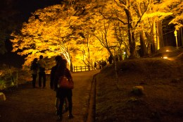 The lights are lit in the valley of Korankei in Japan to show of the beautiful autumn colors.