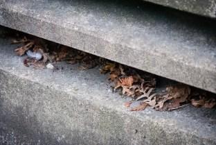 Hösttrappa. / Autumn stairs.