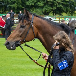 A horse on July racecourse in Newmarket.