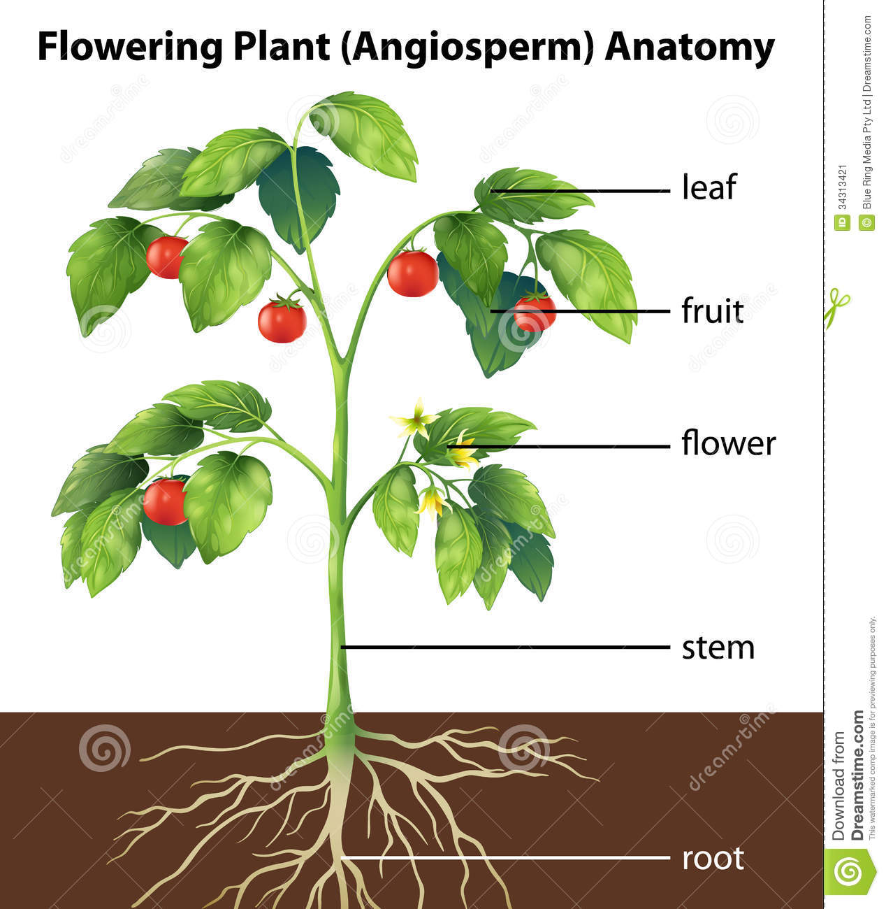 Plant Awhatomy