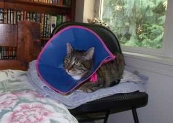 Woebegone kitty! She tore her back nail this week and the vet sent her home with the cone collar to keep her from licking her paw - she has been most displeased