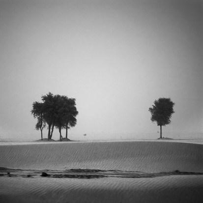 desert storm trees I
