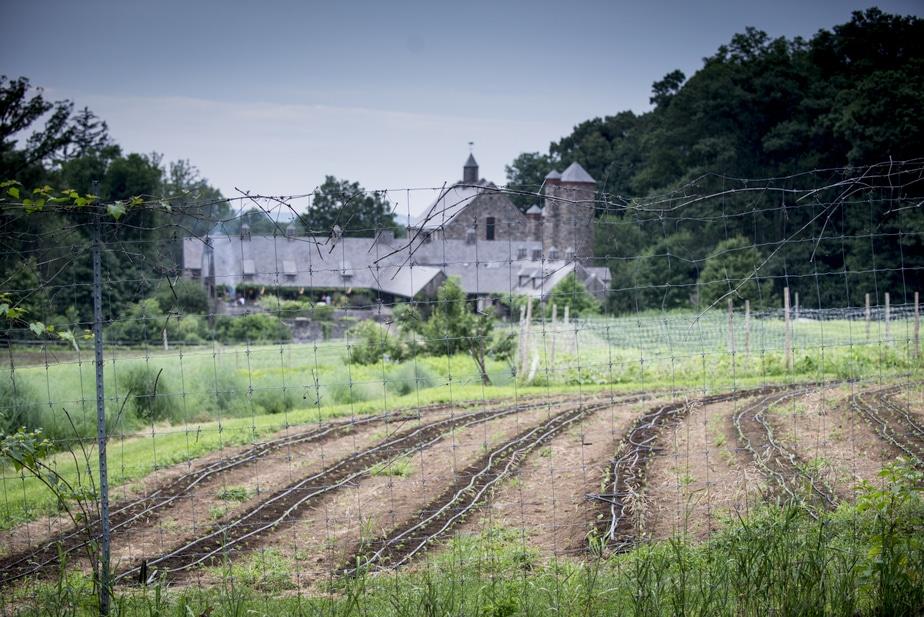 Stone Barns / Rockefeller Preserve Engagement