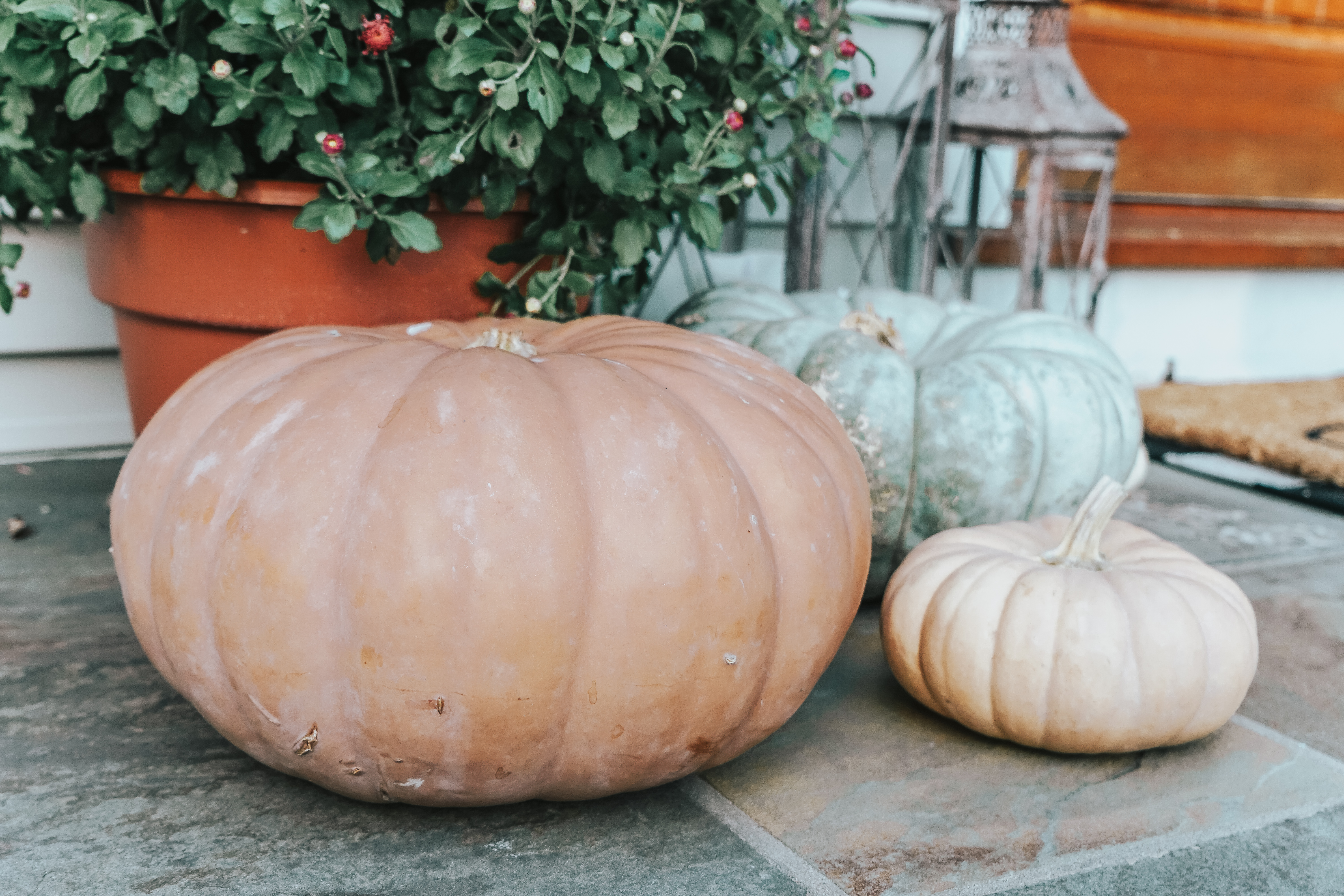 Do you have questions about caring for pumpkins? These pumpkin tips and tricks will help you choose the right pumpkin and keep it looking great!