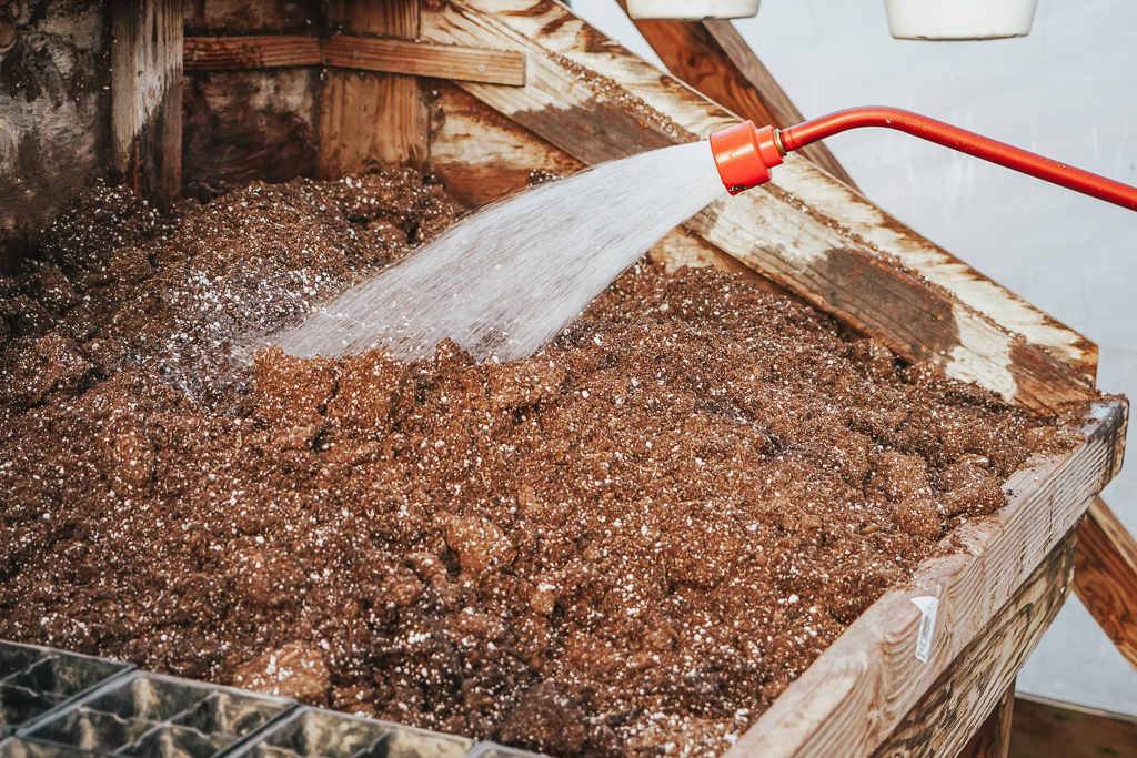 Are you wanting to do seed starting, but don't know how or when? Well, we are giving you all the pro tips you need to make you look like a gardening pro!