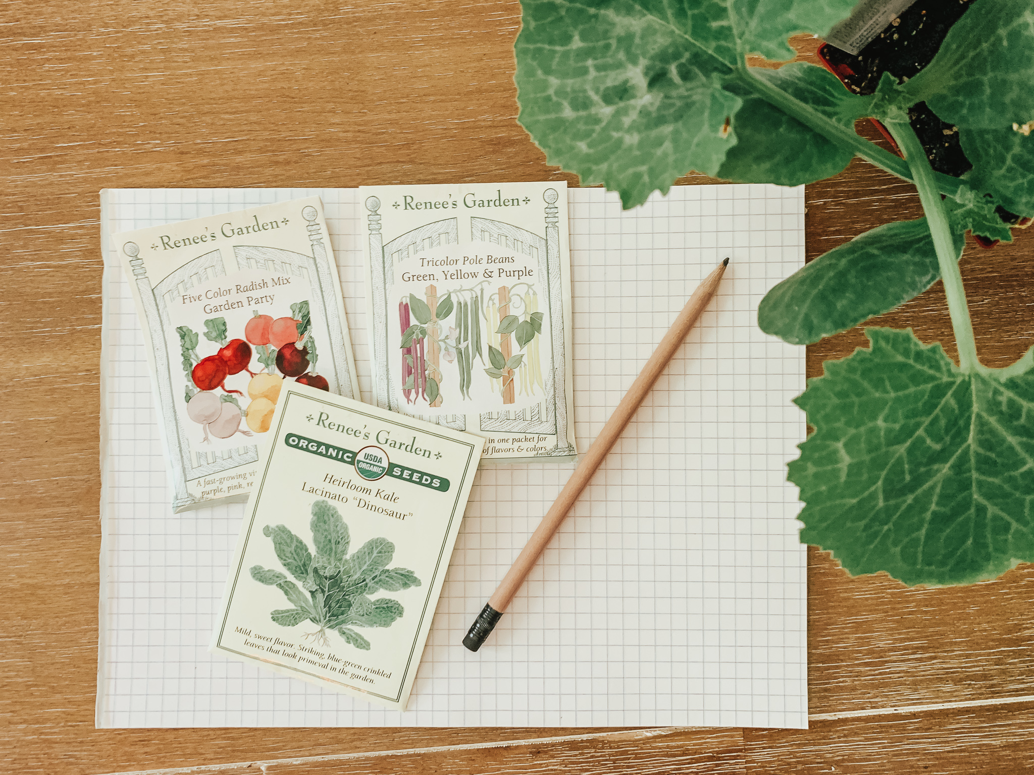 getting ready to map out vegetable garden with seeds and graph paper