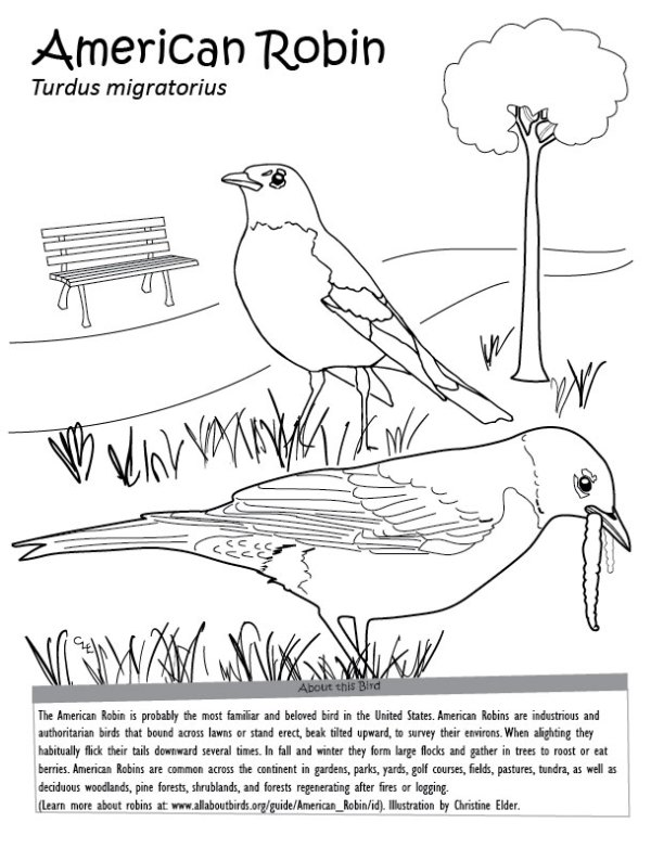 robin coloring page # 8