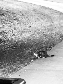 Guardian Cat 2