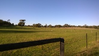 paddock behind our place