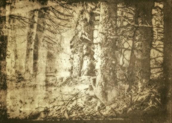 plume sur cyanotype sur papier, virage au thé, encaustique, A4, 2018